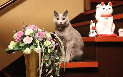 楽天トラベル看板猫15位入賞