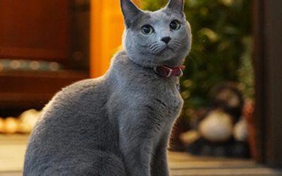 大手小町に藤家旅館の猫女将が本日公開